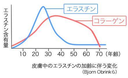コラーゲンとエラスチンの加齢に伴う変化